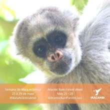Social media posts: Atlantic forest monkey