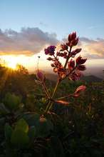 Conserving precious biodiversity