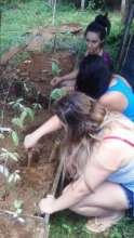 caring for the seedlings