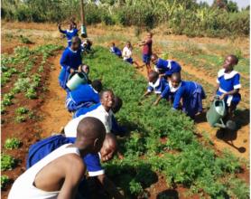 Bamendakwe school children working in their garden