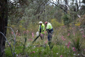 Abundance of wildflowers at Wildflower Reserve