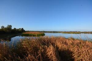 Stunning Bibra Lake