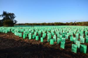 3,125 native seedlings planted at Bibra Lake