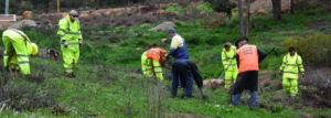 Removing invasive weeds from Lesmurdie Falls