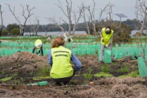 Volunteers Planting Future Nesting Sites