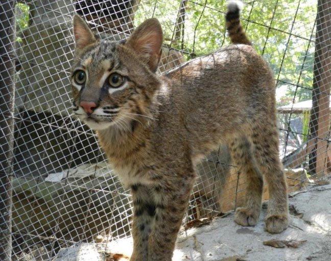 Care for AWARE's Ambassador Animals