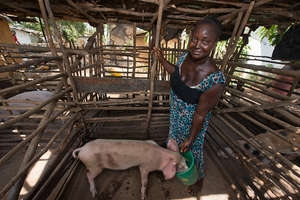 Fatu Whongle, pig farmer in Sierra Leone 4/2014