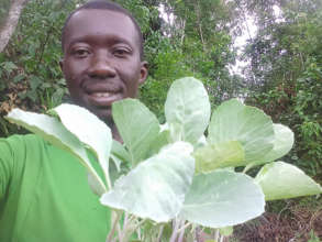Francis Transplanting Cabbage