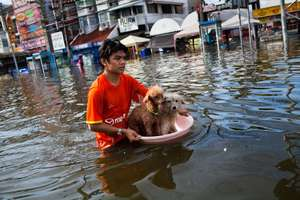 rescuing dog in flood water