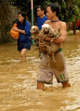 Rescuing a  hand full of dogs