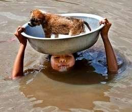Puppy on child's head in flood water