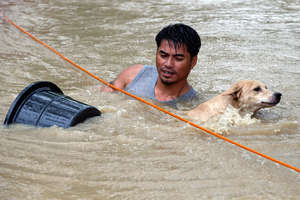 Daring dog rescue in rapid flood water