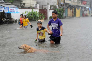 dog with kids seeking safety in flood water