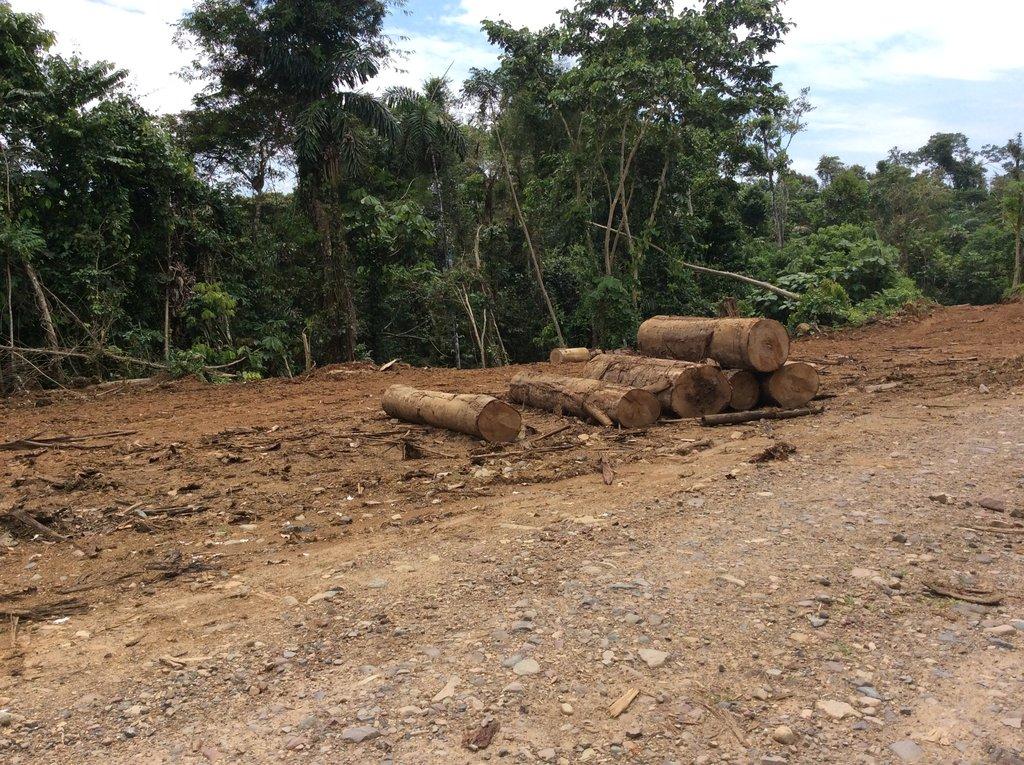 Build a Classroom, Save the Amazon