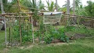 Bahay Kubo Vegetable Garden November 16, 2014
