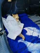 Bella-Rehoboth Vet Clinic,treated for tick fever