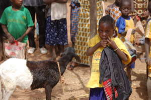 Primary school girl with her lamb