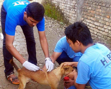 Vaccinating dogs on World Rabies Day