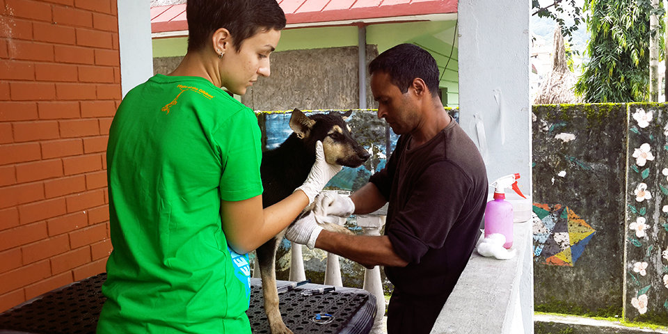 Giving Animals Hope in Nepal