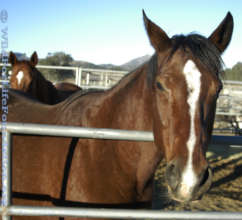 Rescue Horses served through WFLF Hay Drive