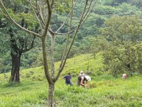 Hillside of reforestation area