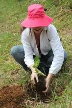 University student planting a tree
