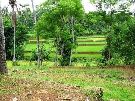 Indonesian Ecological Restoration & Education