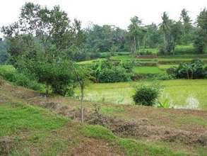 Rice Paddy to Restore