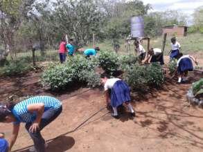 Children install micro-drip-irrigation system