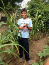 Silvio Mayorga student harvests cucumber!