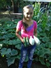 Harvesting Nicaraguan squash
