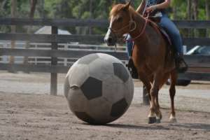 A little soccer game on Help a Horse Day!