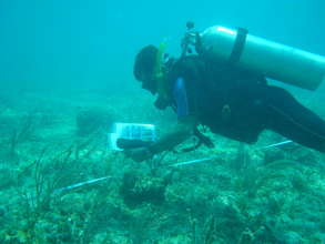 Reef monitoring in Puerto Morelos National Park