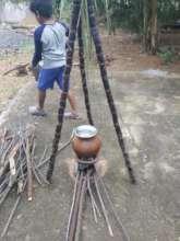 Pongal preparation