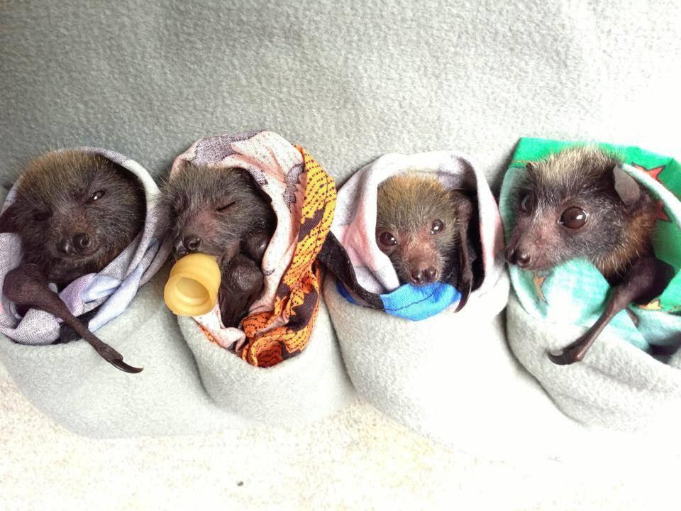 Help Baby Bats Take Flight!