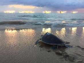 Releasing Turtles in Phang Nga