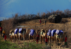 CHAT Camel Mobile into arid areas