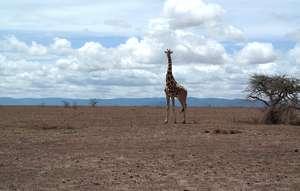 Example of environmental desolation