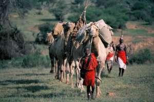 Camel mobile
