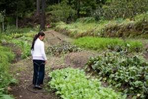 Touring the Habitat Guatemala community garden.