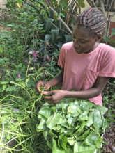 Harvesting Greens in the Garden