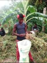 Youth Harvesting LFBS peanut crop!