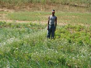 Intercropping - reaping benefits