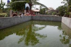 The fish tanks