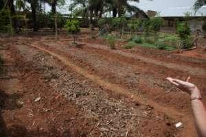 The vegetable garden of the farm