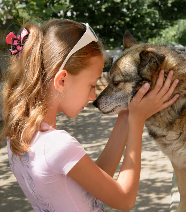 Protecting Pets In Domestic Violence