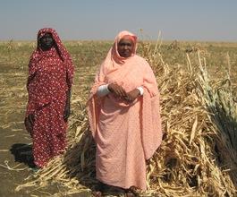Uniting Women Farmers in Sudan 2