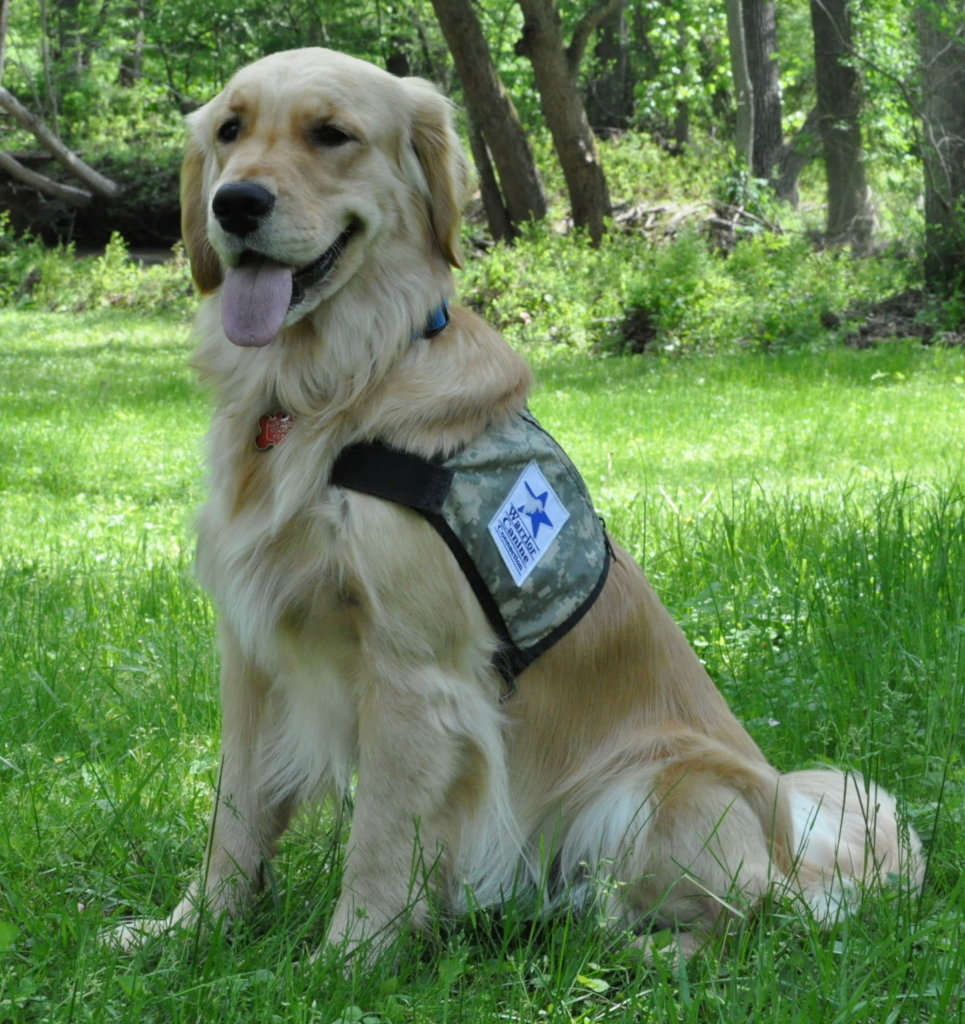 Fund a Warrior Canine Connection Service Dog