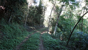 The road inside the forest.