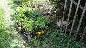 More seedlings.